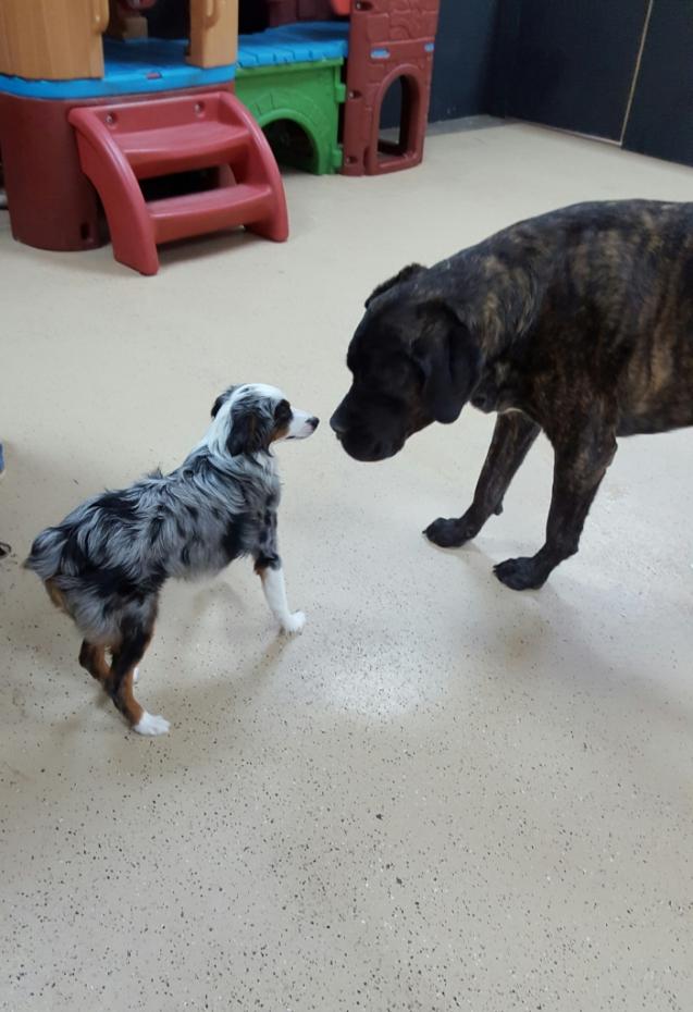 Stella and Apollo