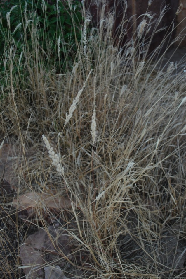 the grass of the rocky desert