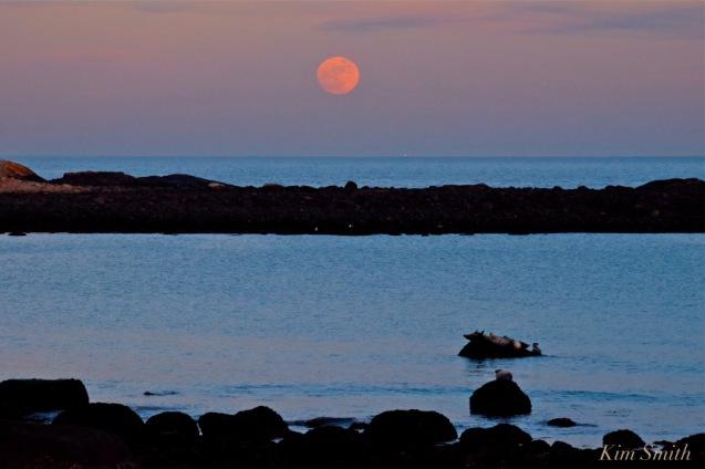 full-moon-wolf-moon-brace-cove-gloucester-seals-cape-ann-copyright-kim-smith